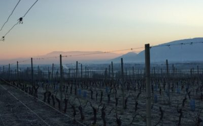 Lever du soleil sur notre vignoble